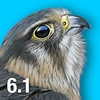 iBird UK & Ireland Guide to Birds