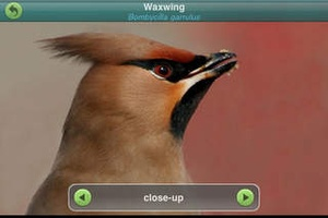 Screenshot Birds of Britain and Ireland (Pro Edition) on iPhone