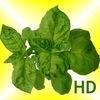 Grow Herbs HD