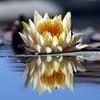 Photo Reflection HD