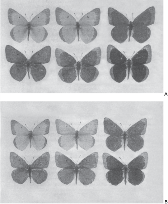 fig187