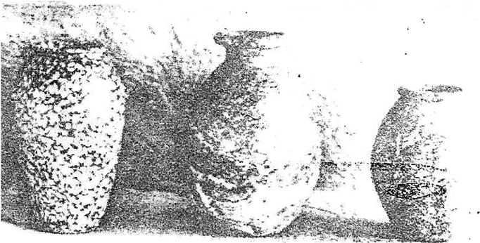 fig244