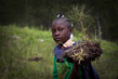 Haitian Students Breathe New Life into Depleted Pine Forest 12.14272