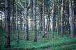 """UN Forum on Forests Photo Competition Winner: """"My Favorite Place"""" 14.571264"""