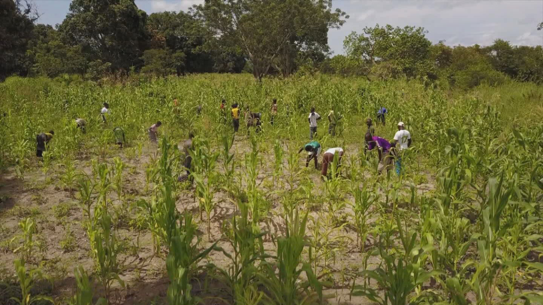 WFP  DRC FOOD CRISIS