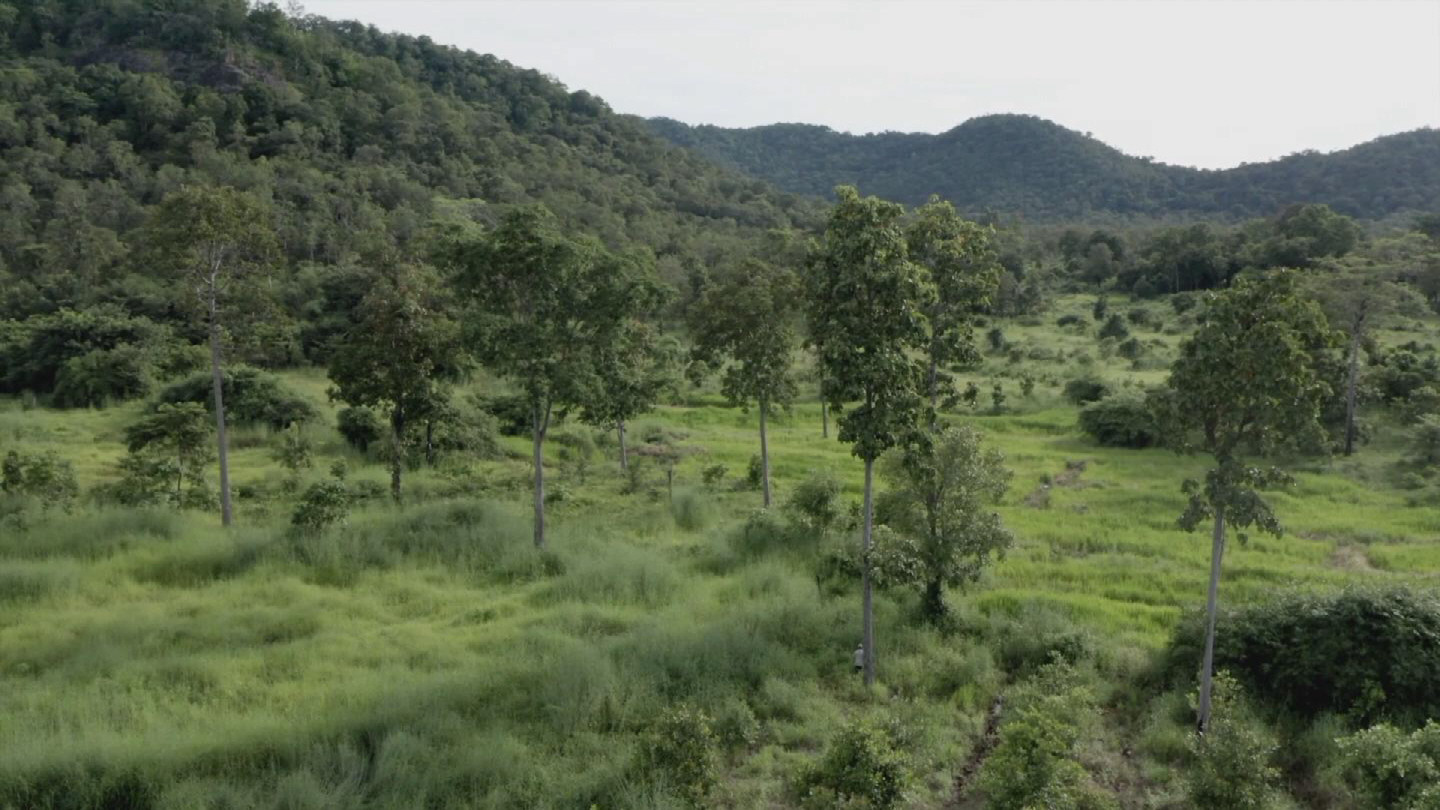 CAMBODIA  INTERNATIONAL DAY OF FORESTS