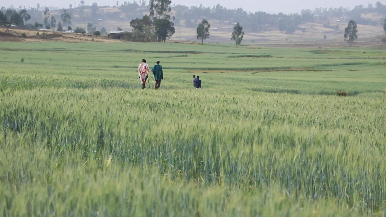 ETHIOPIA  CLIMATE CHANGE