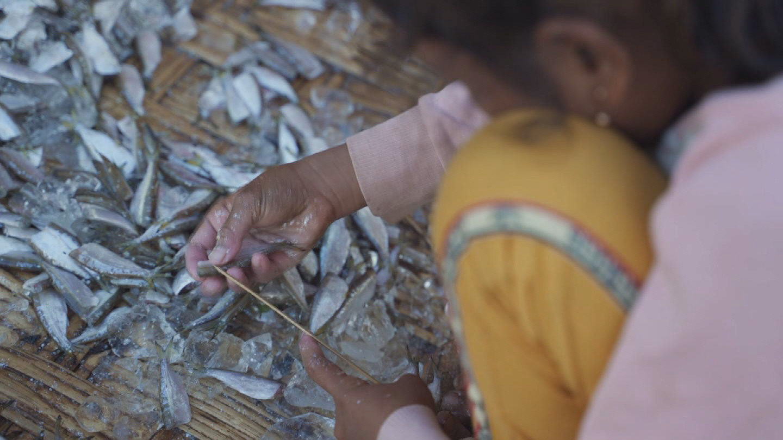 FAO  CAMBODIA FISHERIES CHILD LABOUR