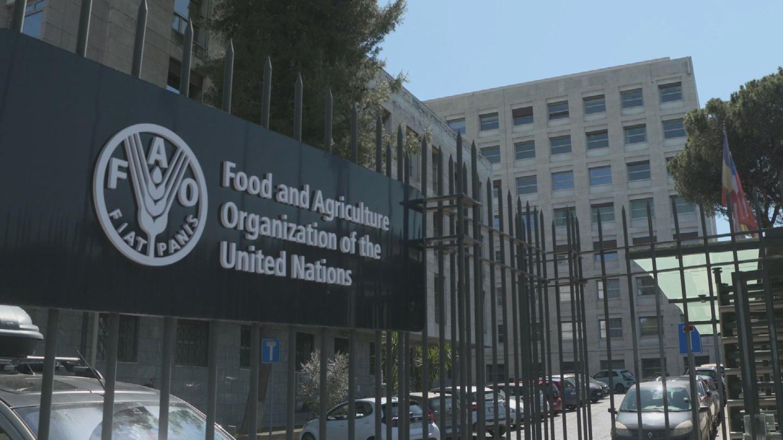 FAO  WORLD FOOD FORUM OPENING