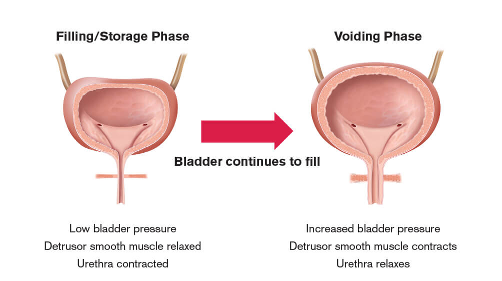 astellas - neurologic control of the bladder