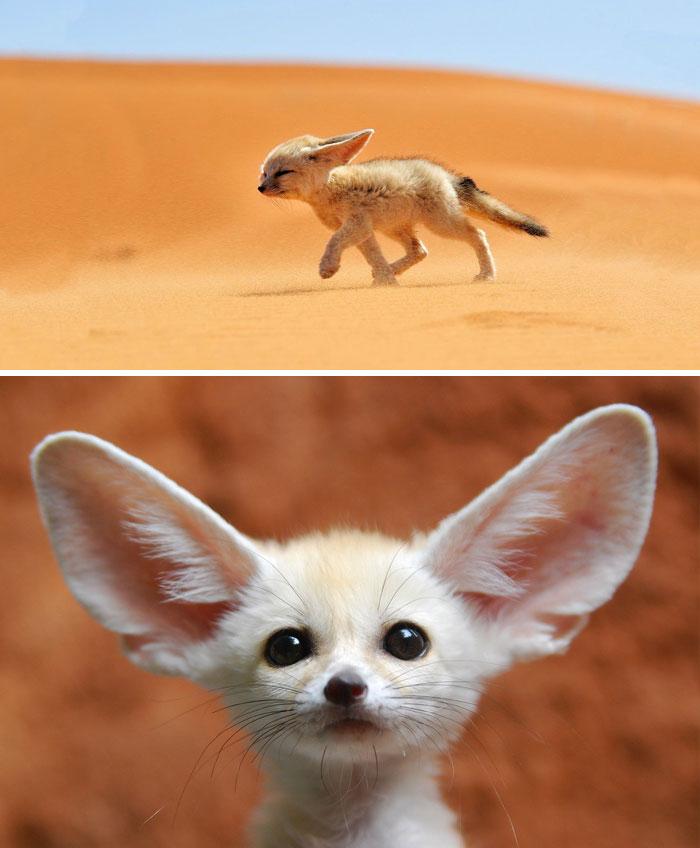 exotic animal babies