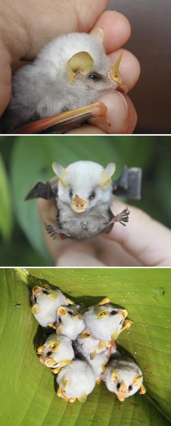 exotic-animal-babies