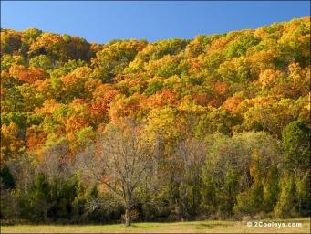 39_fall_foliage_hillside.jpg