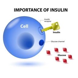 InsulinCellAndKeyDiagram.w830.web.jpg