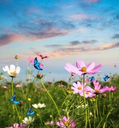 daisies and butterflies.jpg