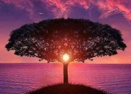 tree crop-2.jpg