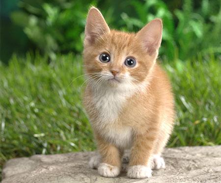 CutePuppyBag