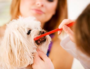 Pet dental care at Town and Country