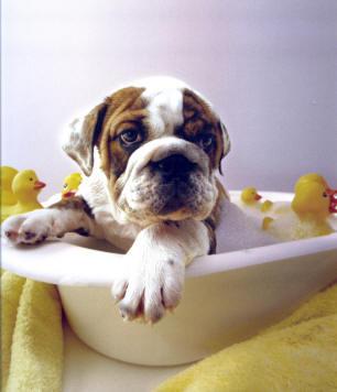 affordablel pet grooming to prevent disease