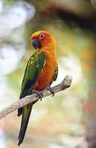 Bird Health Examination