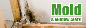 Mold & Mildew Alert!