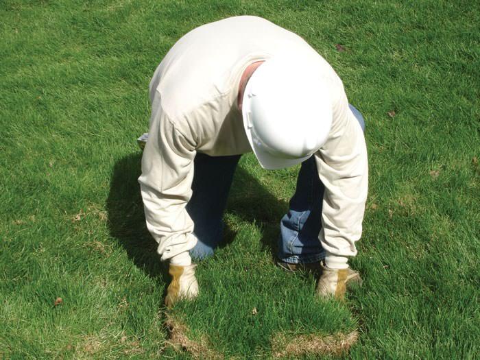 restoring landscaping