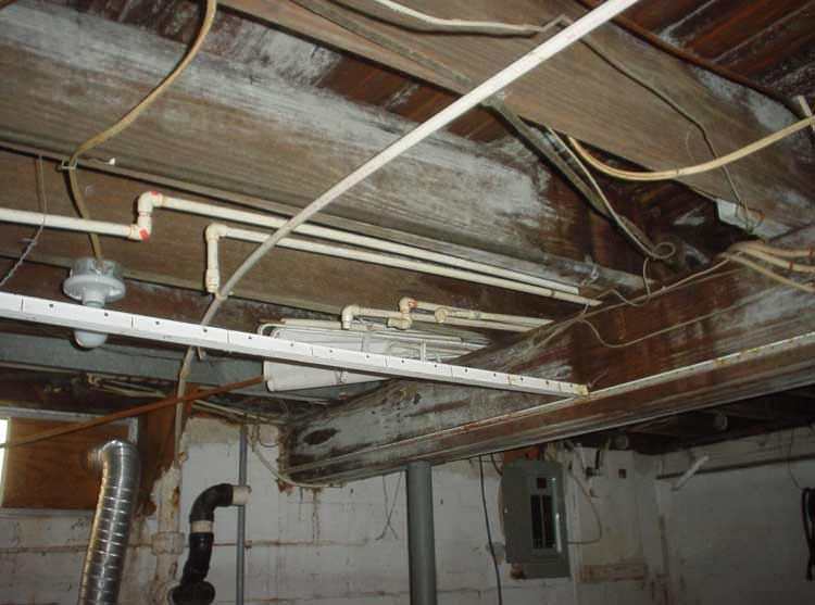 a humid basement overgrown with mold and rot in Alpena