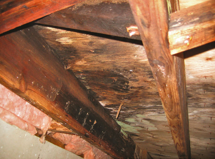 Extensive crawl space rot damage growing in Rogers City