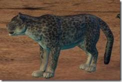 minisnowleopard