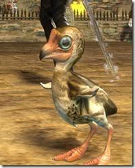 gw2-mini-moa-chick-2