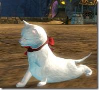 gw2-mini-white-kitten-gemstore