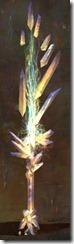gw2-zenith-blade-sword