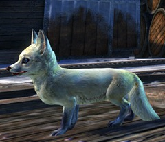 gw2-mini-arctic-fox-kit-2