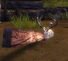 gw2-potion-of-jackalope-transformation-3