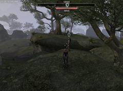 eso-hunting-the-troll-greenshade-quest-guide