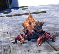 gw2-mini-freshwater-crab-set-3-minis