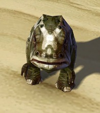 swtor-mottled-blurrg-pet