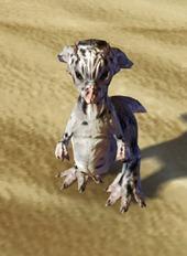 swtor-taun-fawn-pet-2