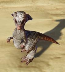 swtor-taunlet-pet-2