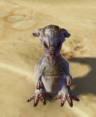 swtor-taunlet-pet