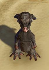 swtor-taunta-pet