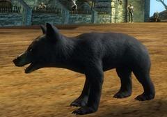 gw2-mini-bear-cub