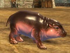 gw2-mini-hippo-calf-2