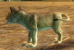 gw2-mini-lion-cub-pet-2