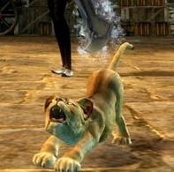 gw2-mini-lion-cub-pet-3