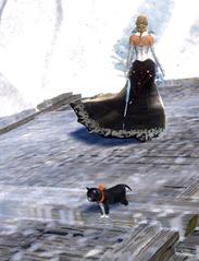 gw2-mini-zuzu-cat-of-darkness-2