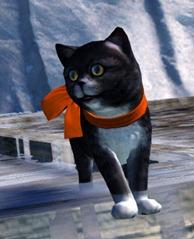 gw2-mini-zuzu-cat-of-darkness