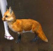 gw2-mini-fox-kit-2