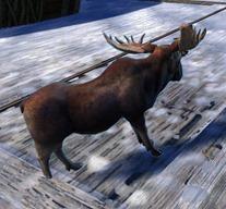 gw2-miniature-moose-3