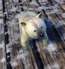 gw2-mini-polar-bear-cub-2